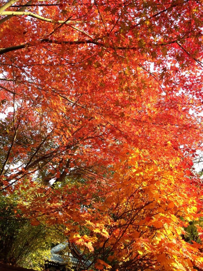 箕面の美しい紅葉!!